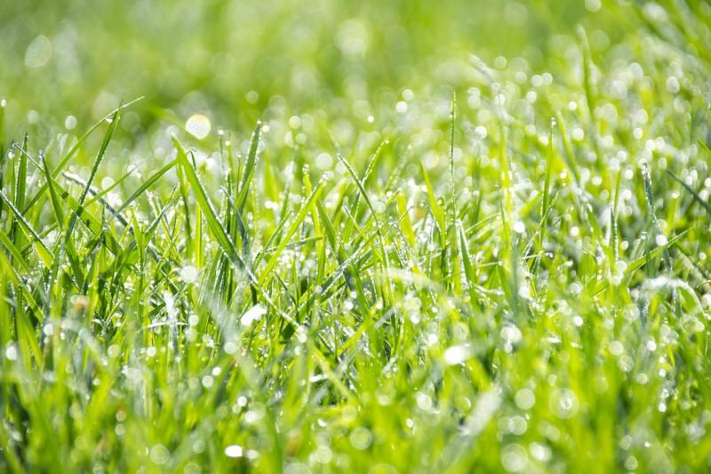 Sejanje trave različnih vrst